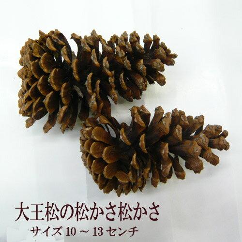 [花材] 大王松 松かさ1個 クリスマスリース 松ぼっくり 特大 クリスマスリース おしゃれ クリスマスリース 手作り 材料と キット
