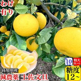 \糖度12度/高知県産 土佐文旦 減農薬 約10kg 小傷訳あり品 3L-L混合 ブンタン 送料無料