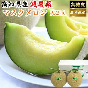 母の日 ギフト 高知県産 マスクメロン 土佐の楽園 大玉(約1,5kg×2) お取り寄せ ご家庭用 高級 フルーツ 果物 送料無料