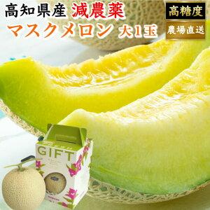 高知県産 贈答用 高級マスクメロン 土佐の楽園 大玉(約1,5kg) お取り寄せ お歳暮 高級 ギフト フルーツ 果物 全国一律送料無料 【#元気いただきますプロジェクト】