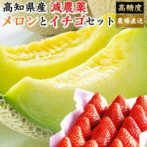 高知県産 マスクメロン イチゴセット 土佐の楽園 大玉 お取り寄せ お歳暮 贈答 高級 ギフト フルーツ 果物 送料無料