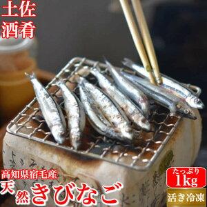 天然キビナゴ たっぷり1kg 高知県宿毛産 活き冷凍きびなご 粗塩付き 唐揚げ フライ 天ぷら 酒の肴 海鮮 珍味