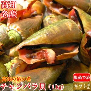 土佐の逸品 チャンバラ貝 (マガキ貝)1kg 高級海鮮珍味 高知特産 酒の肴 ちゃんばら貝 塩茹で済み 誕生日 送料無料 冷凍便 ギフト グルメ 珍味 海産物