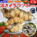 海鮮 珍味 活き〆 生ウツボカット(うつぼの唐揚げ、天ぷら、すき焼き、鍋用)300g×2 秘伝のタレ付 土佐 高知 伝統食…