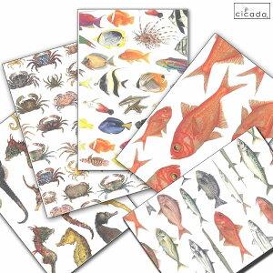 【平日13時までのご注文は当日発送】 cicada 和紙はがき ばら売り 海シリーズ 魚 ポストカード 金目鯛 タツノオトシゴ 熱帯魚 伊豆