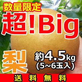 『超!Big』梨【送料無料】5〜6玉(約4.5kg)産地「茨城」より発送![御歳暮][お歳暮][御年賀][お誕生日][プレゼント][贈答][贈り物]