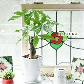 観葉植物 パキラ どこでも運気アップパキラ 卓上ミニサイズ(陶器受け皿付) 【陶器鉢】