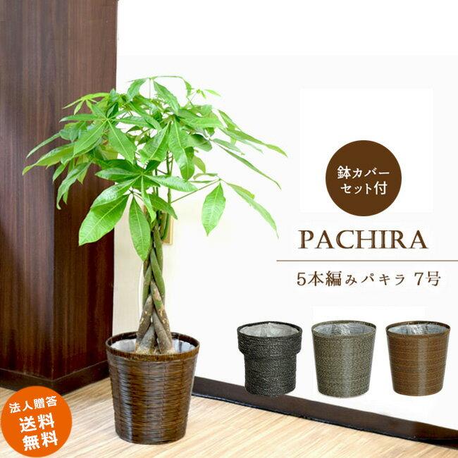 ≪スタンダード品≫ 中型7号パキラ 5本編み仕立て(選べる鉢カバーE・M・N付き) 送料無料 観葉植物 パキラ