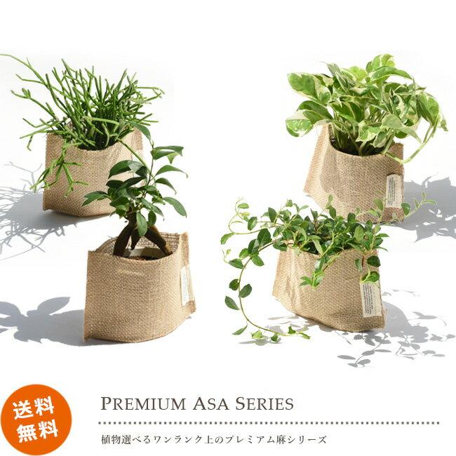 プレミアム麻シリーズ 選べるミニサイズグリーン ガジュマル シャングリラ バニラの木 ペペロミア ポトス リプサリス 送料無料 観葉植物 おしゃれ