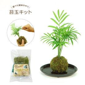 お手軽 手作り 苔玉キット観葉植物 おしゃれ インテリア こけだま コケ玉 インテリア モスワーク