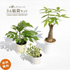 観葉植物 インテリア おしゃれ 卓上サイズ お試し3点セット 【送料無料】