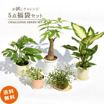 観葉植物お試し5鉢セット