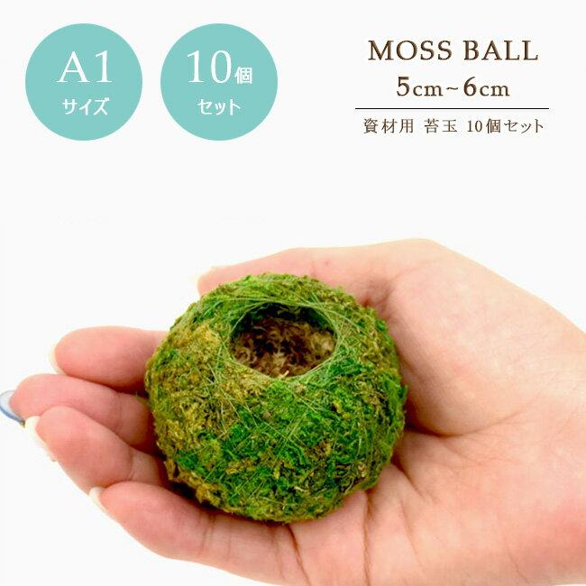 【10個セット】【資材苔玉A1サイズ】資材苔玉5〜6cmの苔玉 お徳用10個セット