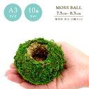 資材 苔玉 A3サイズ 7.5〜8.5cmの苔玉 【お徳用10個セット】モスワーク インテリア 観葉植物 資材 園芸用品 材料 手作…