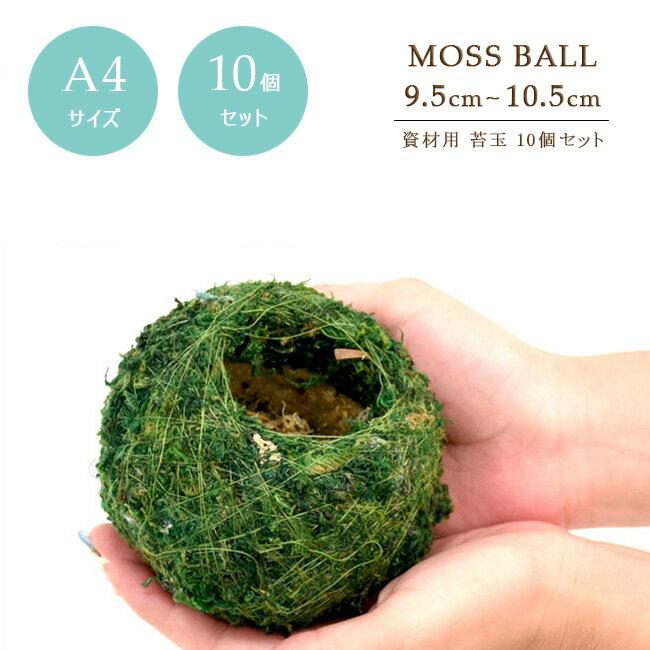 【10個セット】【資材苔玉A4サイズ】資材苔玉9.5〜10.5cmの苔玉 お徳用10個セット