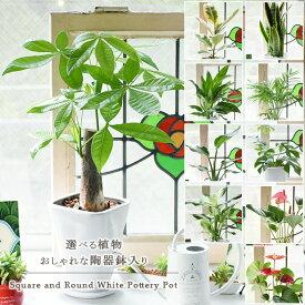 選べる観葉植物10種類 おしゃれな陶器鉢入り 卓上ミニサイズ(陶器受け皿付)観葉植物 小型 おしゃれ インテリア ギフト 祝い 開店 誕生日 新築 プレゼント ラッピング