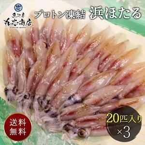 【HO-20】プロトン凍結 浜ほたる 生 ホタルイカ いか 刺身 寿司 海鮮 お取り寄せ 食べ物 グルメ 送料無料