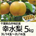 千葉県白井地区産幸水梨5kg3Lサイズ/14玉〜2Lサイズ/16玉(220_17梨)