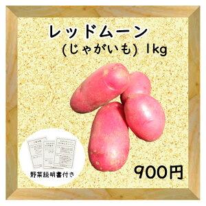 【三浦野菜】じゃがいも ジャガイモ 馬鈴薯 レッドムーン 1kg 【送料半額】【東日本】