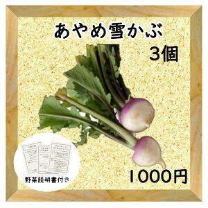 【三浦野菜】 あやめ雪かぶ 2個【送料半額】 【東日本】