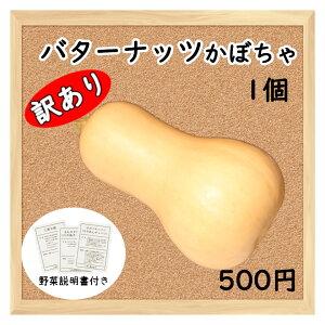 【三浦野菜】 【訳あり】 バターナッツカボチャ 1個 【送料半額】 【東日本】