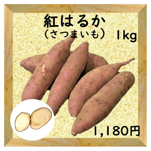 【三浦野菜】 サツマイモ(紅はるか)1Kg 【送料半額】 【東日本】