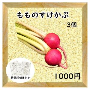 【三浦野菜】 もものすけかぶ 2個 【送料半額】 【東日本】