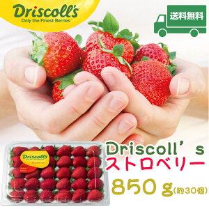 ★送料無料★Driscoll'sストロベリー850g苺・いちご ストロベリー イチゴ