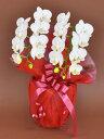 胡蝶蘭 白ミディ2本立ち 14輪以上(つぼみ込み)【送料無料】母の日 お中元 新盆 花 ギフト 開業祝 開店祝 移転祝い …