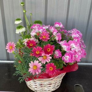 おまかせ季節のお花のフラワーバスケット【送料無料】鉢植え 花 ギフト 夏 寄せ鉢 開業祝/開店祝/移転祝い/お誕生日/各種ギフト/お供えに