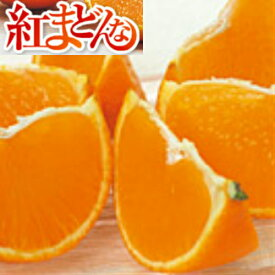 【送料無料】愛媛県産 紅まどんな サイズ L 2kg(約8〜10玉)【ご家庭用】【ご贈答用】【紅マドンナ】