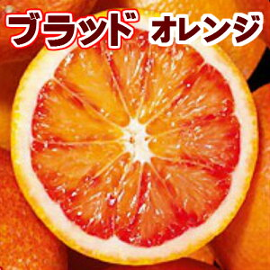 愛媛県 西宇和産 ブラッドオレンジ小玉 3Kg(2S〜S混合)【タロッコ】【ご家庭用】【訳あり】【送料無料】