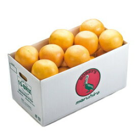 フロリダインディアンリバー地区 Bobbys グレープフルーツ ルビー のし包装不可