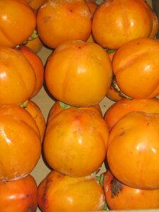 送料無料 高知産 干し柿,吊るし柿用 小サイズ 渋柿ヤシマ約8kg40個くらい 渋柿の中でも渋の非常に強い種類です。渋のきついほど干しあがった柿の味は格別甘くて最高! 糸で吊るすことの