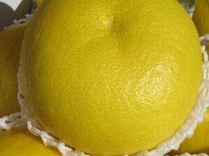 送料無料 数量限定 高知県 特産 文旦 ぶんたん ブンタン 柑橘 みかん2月 3月 4月 5月 6月 初夏 贈答用 プレゼント お返し 内祝い ギフト 果物 お礼 入学進学 ホワイトデー 母の日 出産祝い 父の