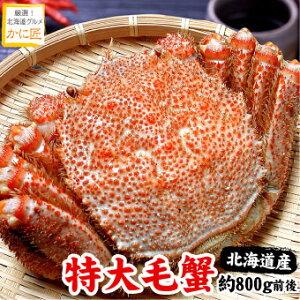 北海道産 毛ガニ 毛蟹 毛がに特大 1尾 約800g前後 蟹 カニ かに けがに 特大 送料無料 ギフト お歳暮