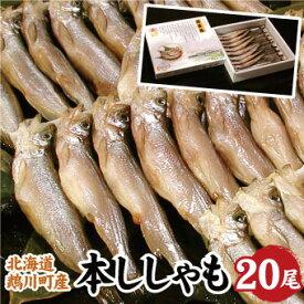 北海道むかわ産 本ししゃも 鵡川(大サイズ) 20尾入 シシャモ 送料無料 ギフト お歳暮 お中元 父の日 敬老の日にもお勧めです