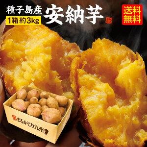 【送料無料】 安納芋 鹿児島県 種子島産 さつまいも あんのういも 安納いも 熟成 安納芋 1箱 (約3Kg) 生芋 蜜芋 唐芋 からいも  年末年始 小腹を満たす ねっとり 甘い 黄金色 おやつ 焼き芋で糖