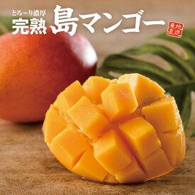 【送料無料】マンゴー 奄美の完熟!島マンゴー (約1kg)× 3箱セット お取り寄せ ギフト お中元