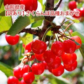 【訳あり】山形県産さくらんぼ 品種おまかせ(佐藤錦・紅秀峰ほか)1kg