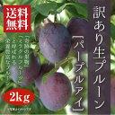 【訳あり】生プルーン[パープルアイ]2kg