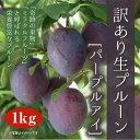 【訳あり】生プルーン[パープルアイ]1kg