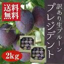 【訳あり】生プルーン[プレジデント]2kg