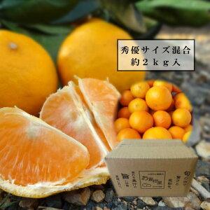 【楽天市場お試しサイズ】春味わう金のお蜜柑「春妃柑」 茶箱 サイズ混合 約2kg入 秀優混合品