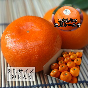 極上柑トロのお蜜柑「蜜ツ星プレミアム」 レギュラー箱 2Lサイズ 初取り果実30玉入