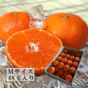 濃厚柑トロのお蜜柑「蜜ツ星(みつぼし)」 レギュラー箱 Mサイズ 秀品 48玉入