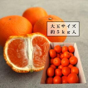 甘薫る美味のお蜜柑「蜜之望」 レギュラー箱 大玉サイズ 約5kg入 秀品