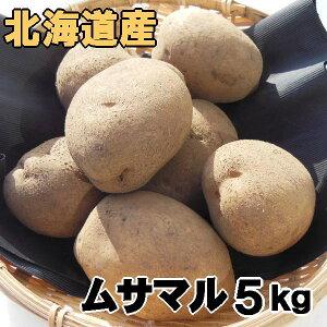 送料無料 越冬じゃがいも ムサマル 5kg 北海道産 ジャガイモ 産地直送