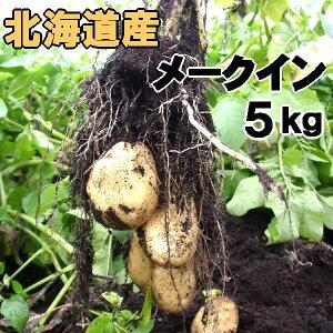 送料無料 越冬じゃがいも メークイン 5kg 北海道産 ジャガイモ 産地直送