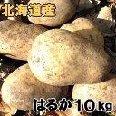 送料無料 新じゃがいも はるか 10kg 北海道産 ジャガイモ 産地直送